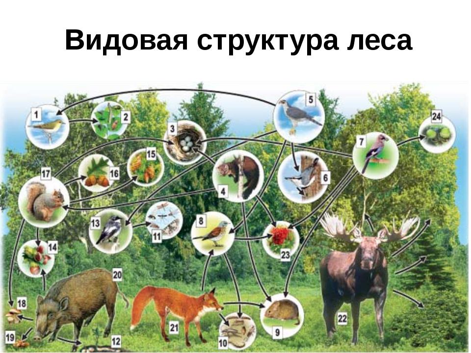 Видовая структура леса