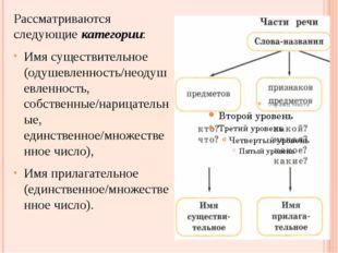 Рассматриваются следующие категории: Имя существительное (одушевленность/неод