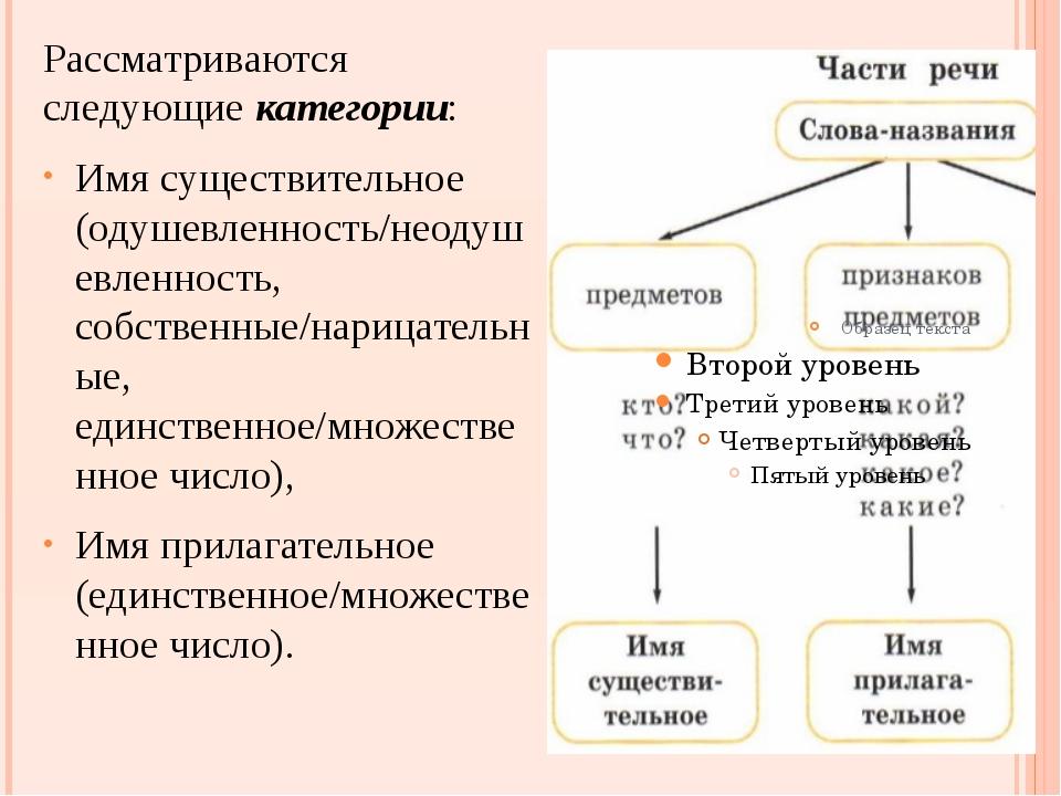 Рассматриваются следующие категории: Имя существительное (одушевленность/неод...
