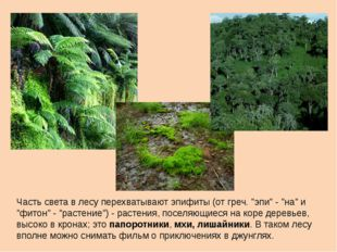 """Часть света в лесу перехватывают эпифиты (от греч. """"эпи"""" - """"на"""" и """"фитон"""" - """""""
