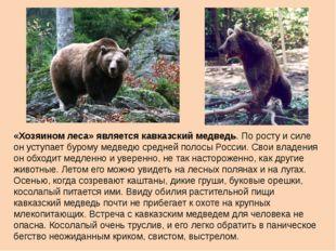 «Хозяином леса» является кавказский медведь. По росту и силе он уступает буро