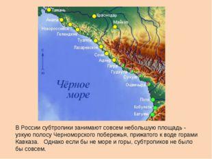 В России субтропики занимают совсем небольшую площадь - узкую полосу Черномо