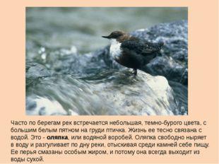 Часто по берегам рек встречается небольшая, темно-бурого цвета, с большим бел