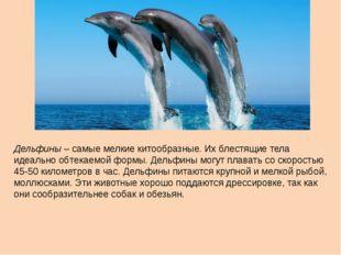 Дельфины – самые мелкие китообразные. Их блестящие тела идеально обтекаемой ф