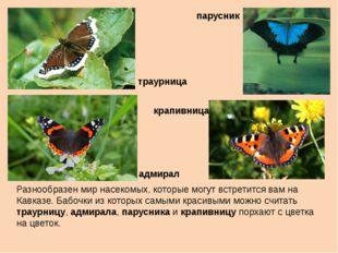 Разнообразен мир насекомых, которые могут встретится вам на Кавказе. Бабочки