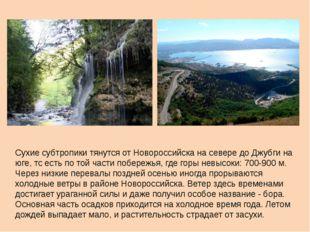 Сухие субтропики тянутся от Новороссийска на севере до Джубги на юге, тс есть
