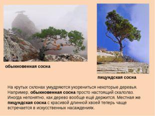 На крутых склонах умудряются укорениться некоторые деревья. Например, обыкнов