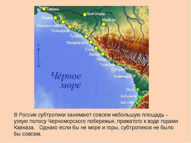 В России субтропики занимают совсем небольшую площадь - узкую полосу Черномо...