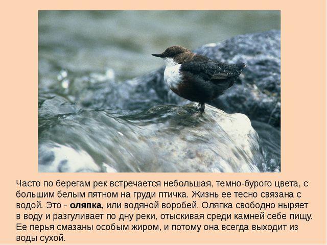Часто по берегам рек встречается небольшая, темно-бурого цвета, с большим бел...