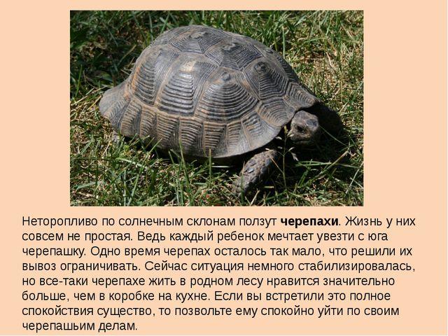 Неторопливо по солнечным склонам ползут черепахи. Жизнь у них совсем не прост...