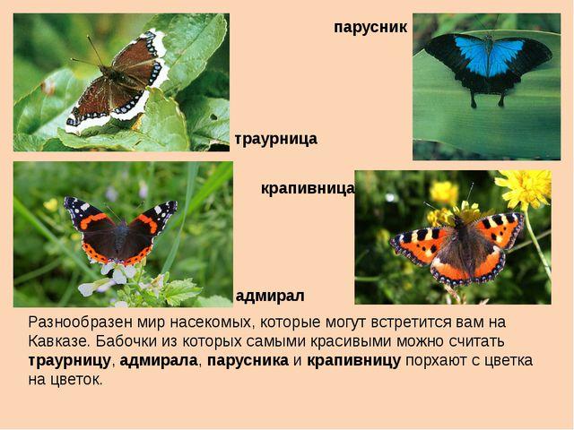 Разнообразен мир насекомых, которые могут встретится вам на Кавказе. Бабочки...