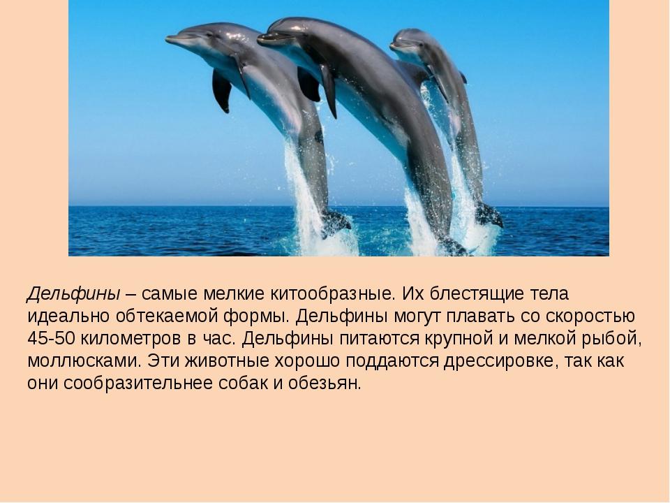 Дельфины – самые мелкие китообразные. Их блестящие тела идеально обтекаемой ф...