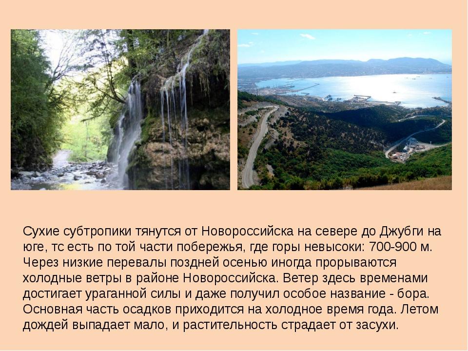 Сухие субтропики тянутся от Новороссийска на севере до Джубги на юге, тс есть...