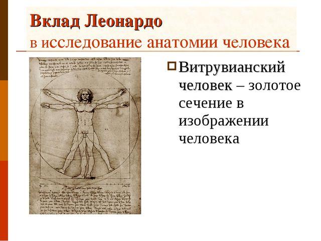 Вклад Леонардо в исследование анатомии человека Витрувианский человек – золот...