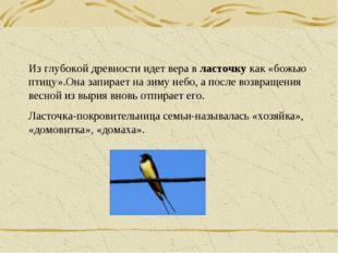 Из глубокой древности идет вера в ласточку как «божью птицу».Она запирает на