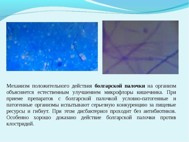 Механизм положительного действия болгарской палочки на организм объясняется...