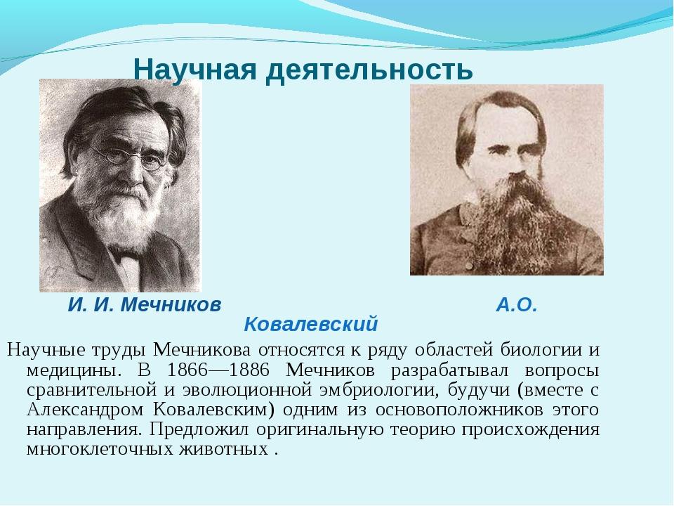 Научная деятельность И. И. Мечников А.О. Ковалевский Научные труды Мечникова...