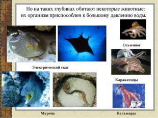 Но на таких глубинах обитают некоторые животные; их организм приспособлен к