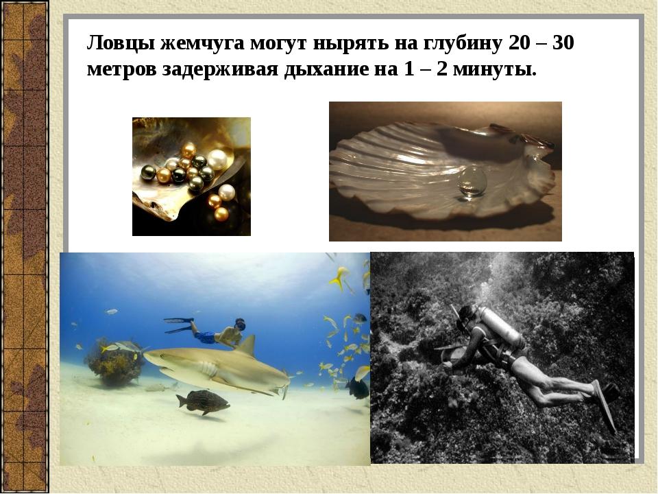 Ловцы жемчуга могут нырять на глубину 20 – 30 метров задерживая дыхание на 1...