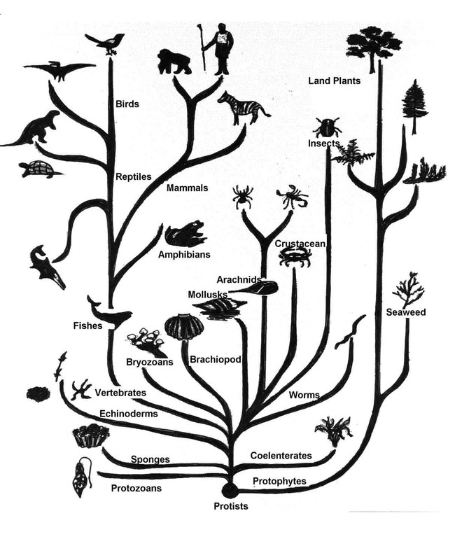 http://www.technologijos.lt/upload/image/n/mokslas/gamta_ir_biologija/S-24939/2-1-treeolif.jpg