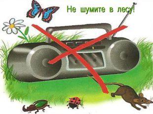 Не шумите в лесу!