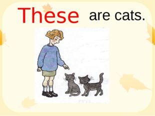 are cats. These
