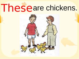 are chickens. These