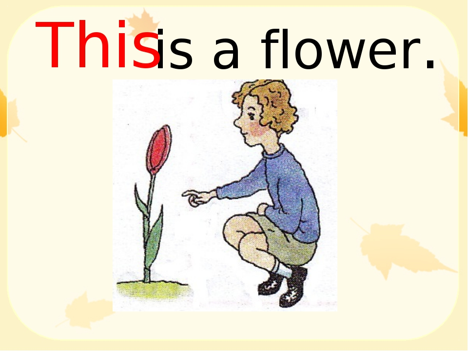 is a flower. This