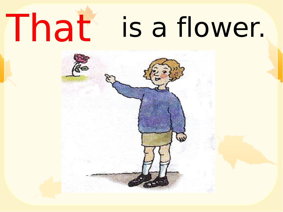 is a flower. That
