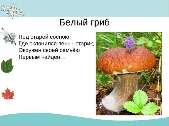 Белый гриб Под старой сосною, Где склонился пень - старик, Окружён своей семь...