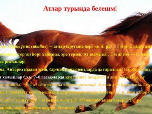Йорт аты(лат. Equus ferus caballus) —атларыругына керүче,йөртү һәм йөк та