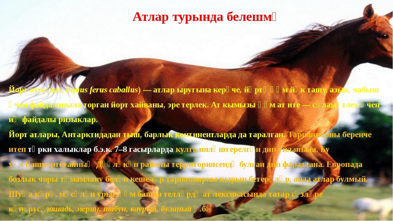 Йорт аты(лат. Equus ferus caballus) —атларыругына керүче,йөртү һәм йөк та...