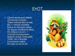 ЕНОТ Юркий маленький зверёк, Полосатый поперёк. Тёмно-жёлтый мех на нём,