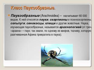 Класс Паукообразные. Паукообразные (Arachnoidea) – насчитывает 60000 видов.