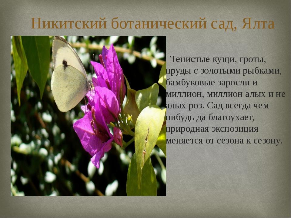 Никитский ботанический сад, Ялта Тенистые кущи, гроты, пруды с золотыми рыбка...