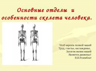 Основные отделы и особенности скелета человека. Чтоб черпать полной чашей Тру