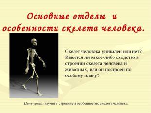 Основные отделы и особенности скелета человека. Скелет человека уникален или