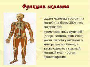 Функции скелета скелет человека состоит из костей (их более 200) и их соедине