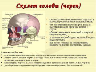 Скелет головы (череп) скелет головы (череп) имеет полость, в которой располаг