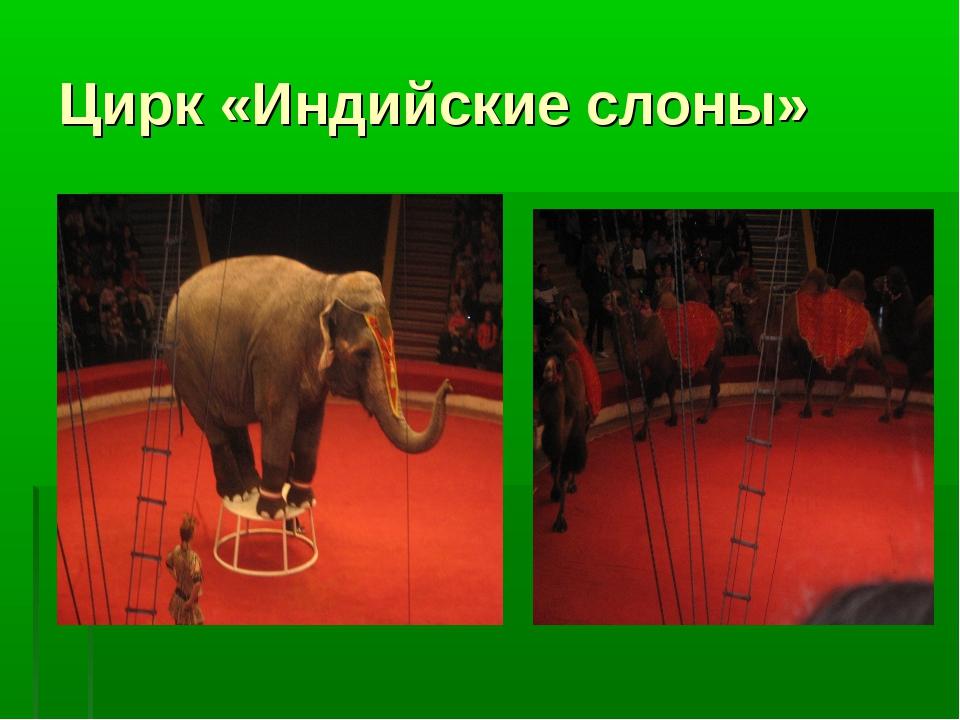 Цирк «Индийские слоны»