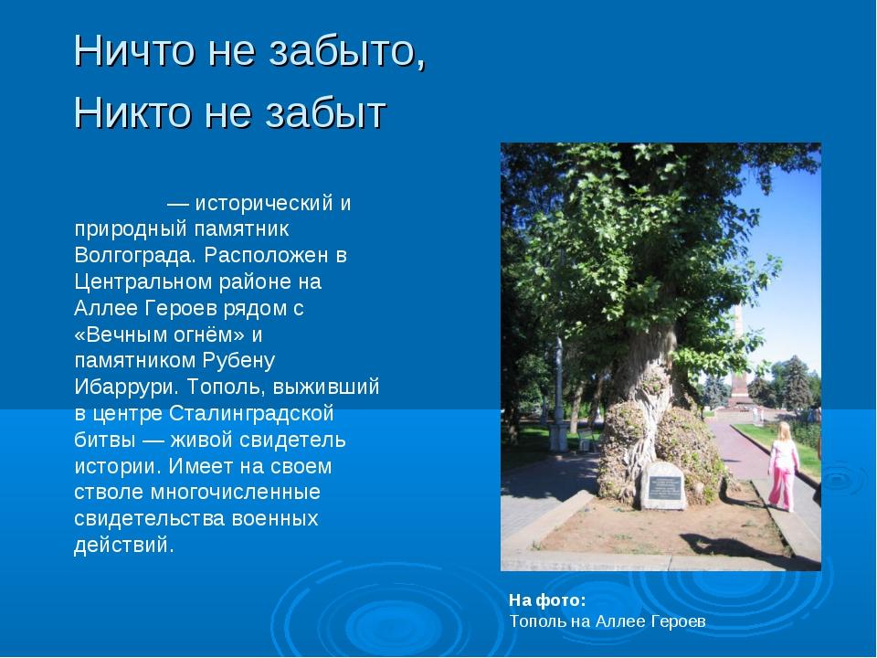 Ничто не забыто, Никто не забыт То́поль на Алле́е Геро́ев— исторический и пр...