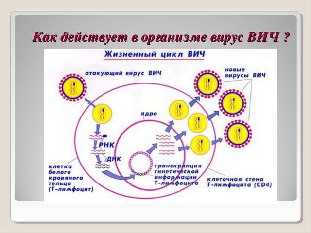 Как действует в организме вирус ВИЧ ?