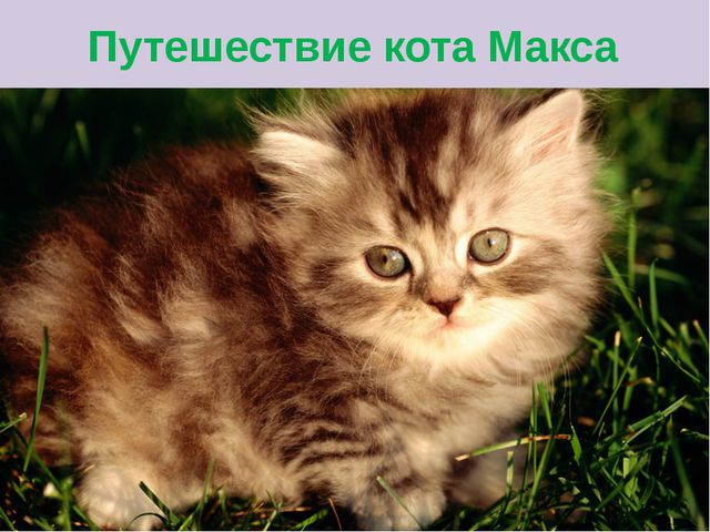 Путешествие кота Макса