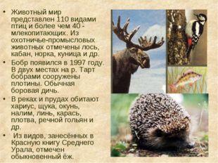 Животный мир представлен 110 видами птиц и более чем 40 - млекопитающих. Из о