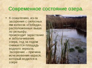 Современное состояние озера. К сожалению, из-за засорения с силосных ям колхо