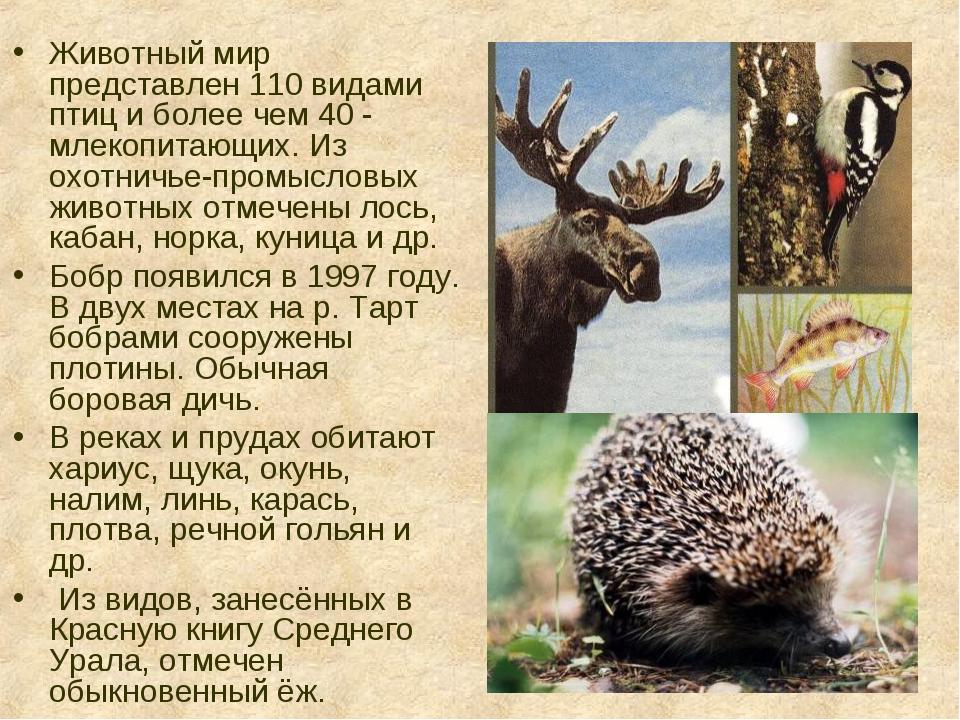 Животный мир представлен 110 видами птиц и более чем 40 - млекопитающих. Из о...