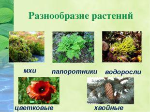 Разнообразие растений мхи водоросли папоротники цветковые хвойные