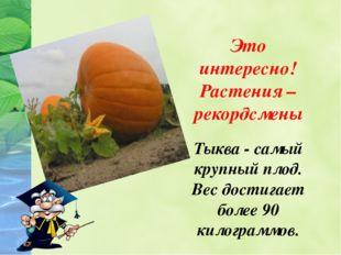 Это интересно! Растения – рекордсмены Тыква - самый крупный плод. Вес достига