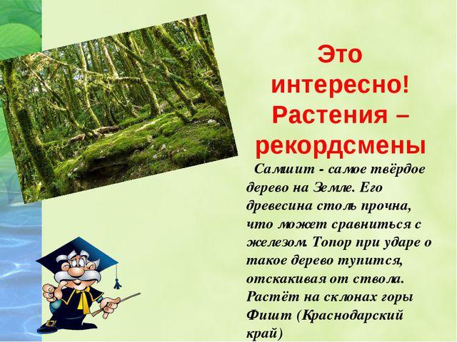 Это интересно! Растения – рекордсмены Самшит - самое твёрдое дерево на Земле....