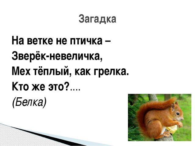 На ветке не птичка – Зверёк-невеличка, Мех тёплый, как грелка. Кто же это?......